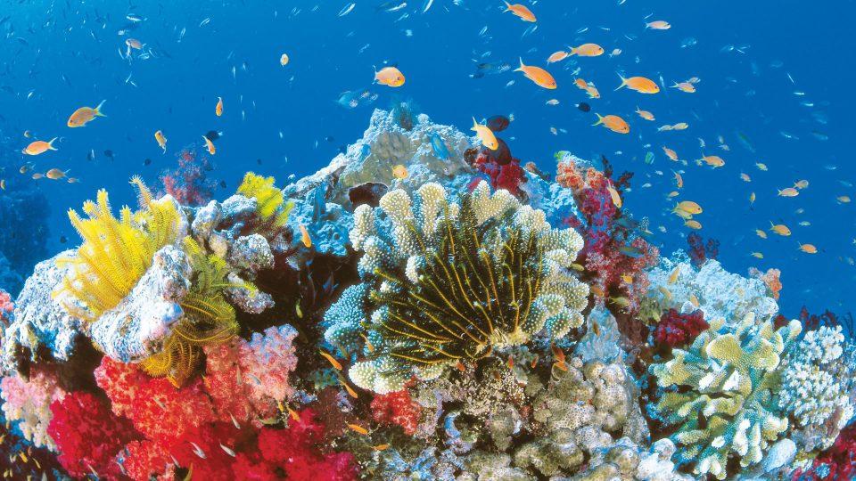 развлечения на островах.Большой Барьерный Риф