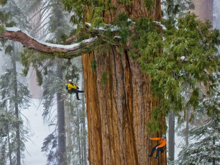 Топ-10 самых высоких деревьев