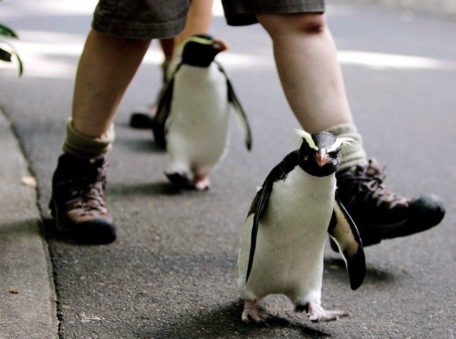 сидней пингвины