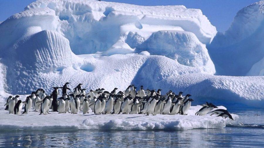 сказочные страны. Terra Australis Incognita - современная Антарктида