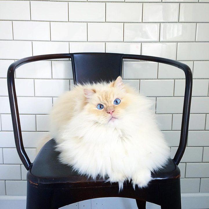 кот по имени Скай