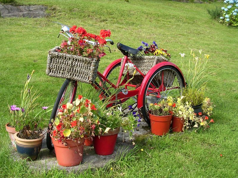 старый велосипед в саду