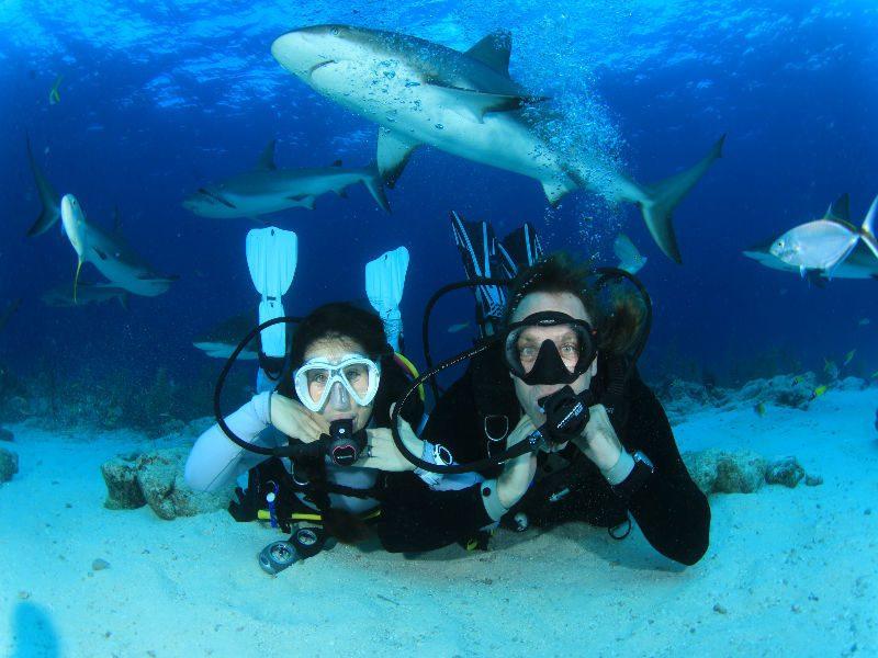 свадьба под водой с акулами