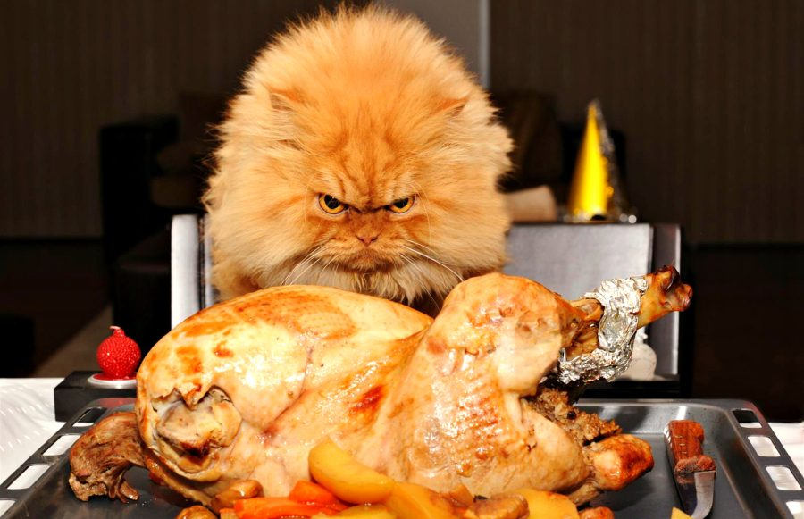 Открытка что, картинки кошки пора жрать приколы