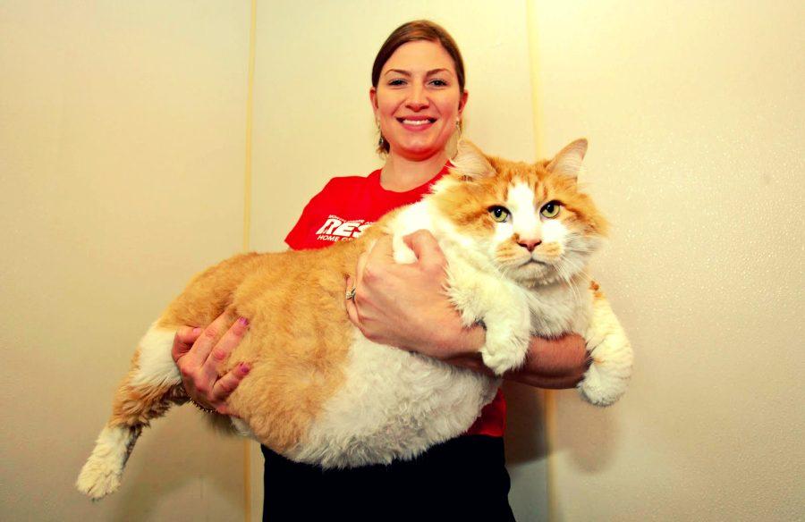 жирный кот