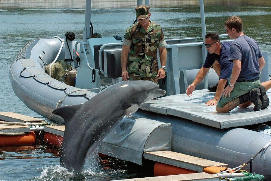 животные на войне. Дельфины