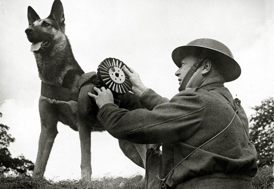 животные на войне. Собаки