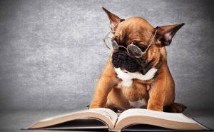 умная собака