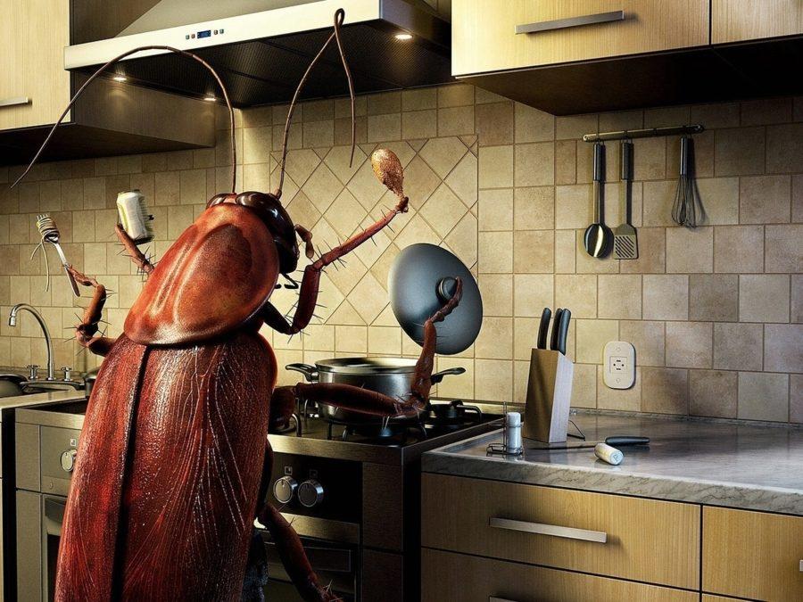насекомые. Таракан