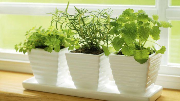 Полезные травы, которые можно вырастить дома