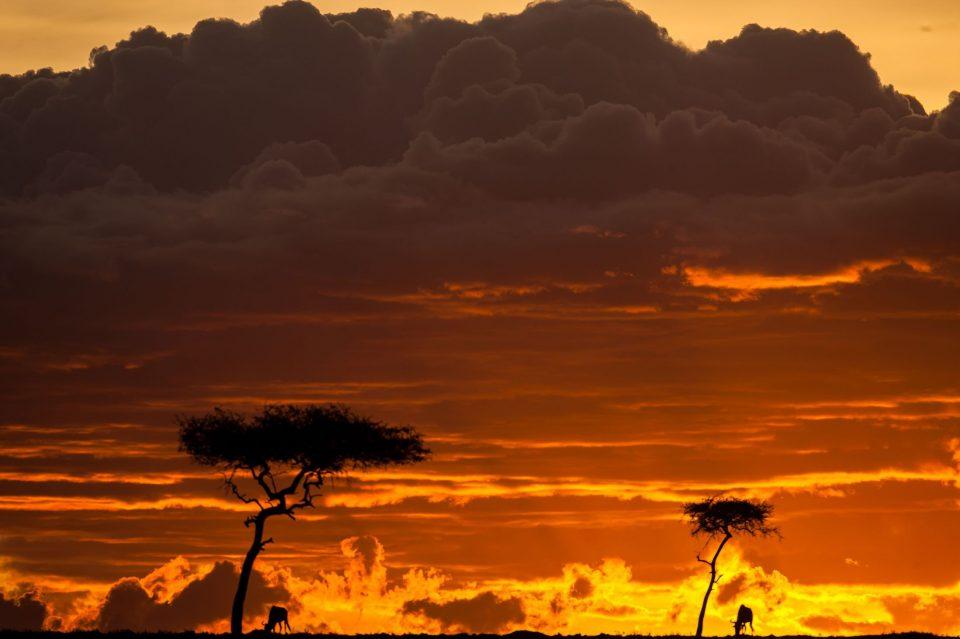 закаты. Кения. Заповедник Масаи-Мара