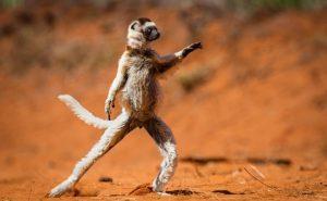 Топ-10 занимательных фактов о животном мире