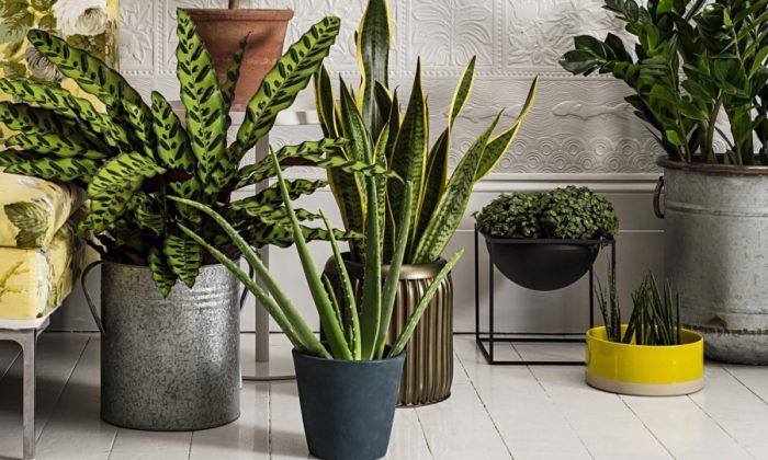 Не все комнатные растения одинаково полезны