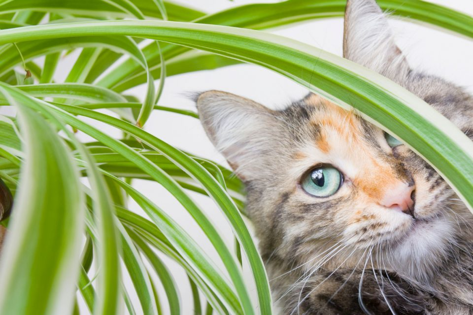 Plants to keep cats out of your garden