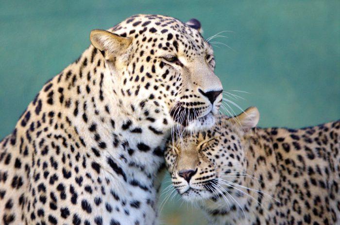 Фото животных которые умеют любить