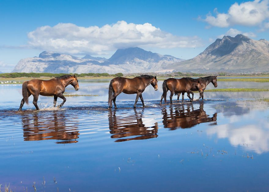 Дикие лошади
