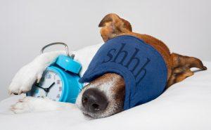 Как выспаться и привыкнуть быстро засыпать? 6 рабочих методов
