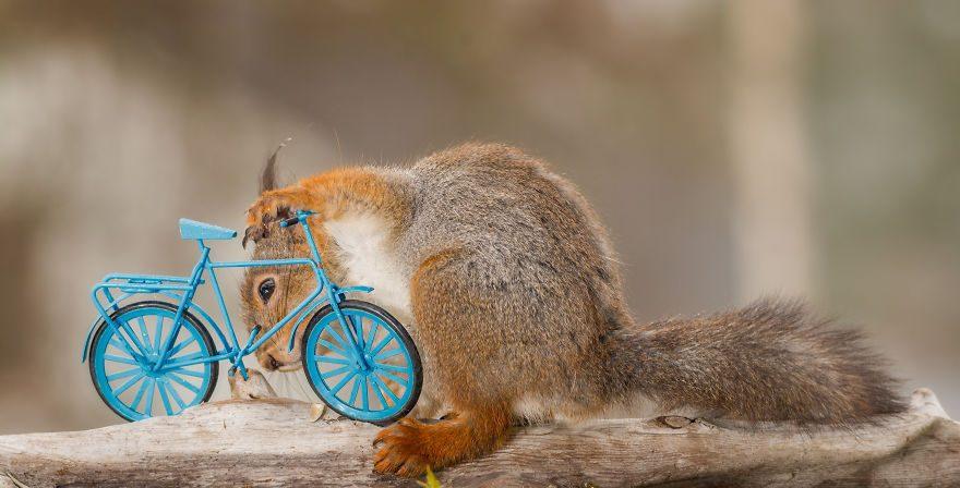 велогонки белка