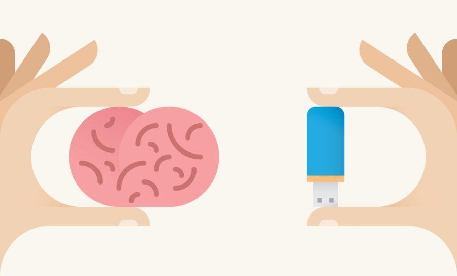 Мозг человека, распространенные мифы