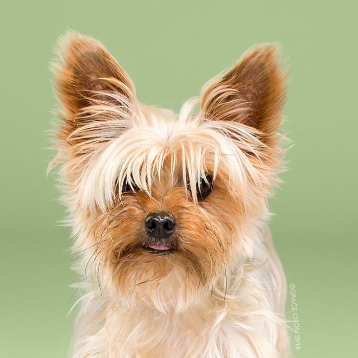 фото маленьких собак