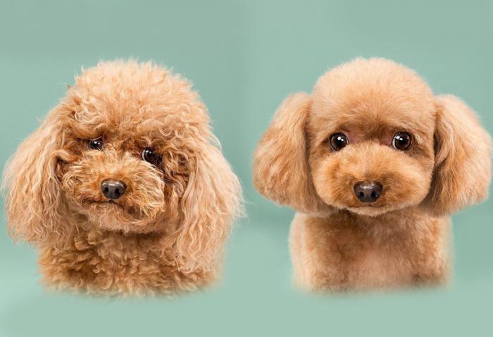 14 фотографий собак до и после стрижки