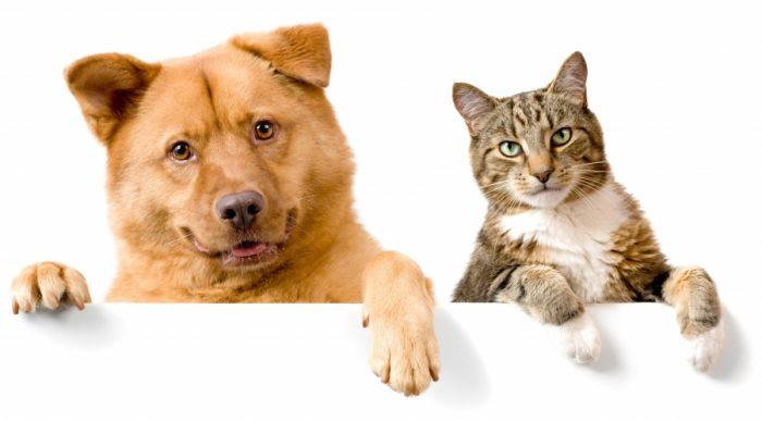 Почему собаки и кошки не любят друг друга?