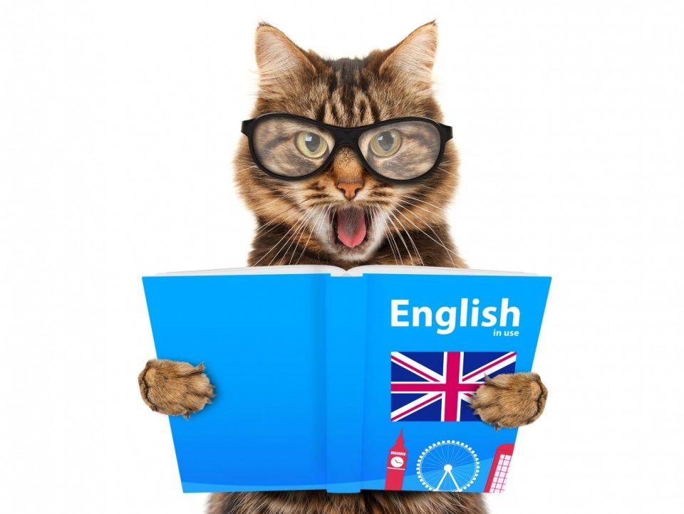 выучить английские слова