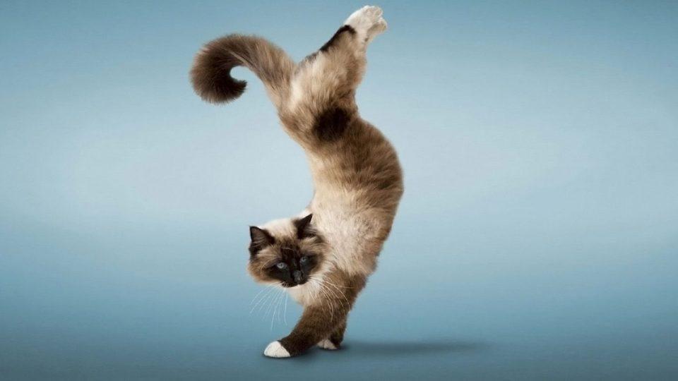 дрессировка кота