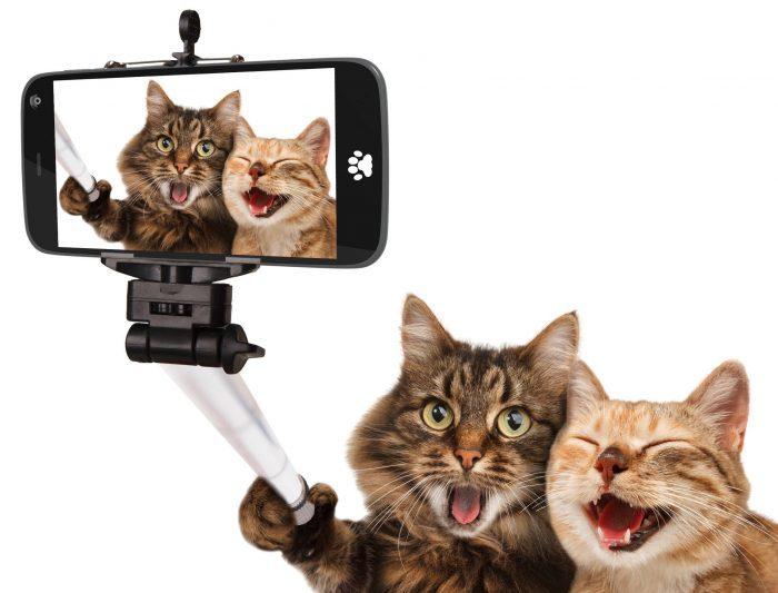 Каким командам и действиям можно обучить дрессировкой кошку?