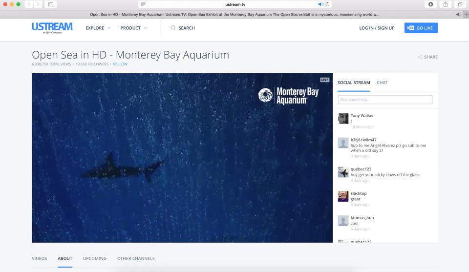 веб камеры океанариум аквариум