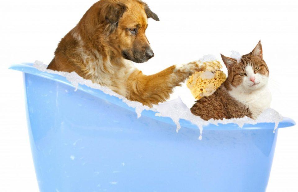покупанная мокрая кошка
