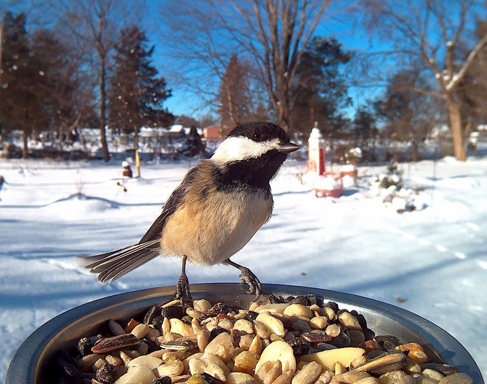 Птицы зимой кормушка