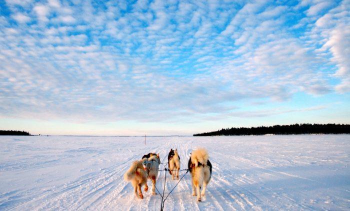 Лапландская зима, новогодняя сказка в фото