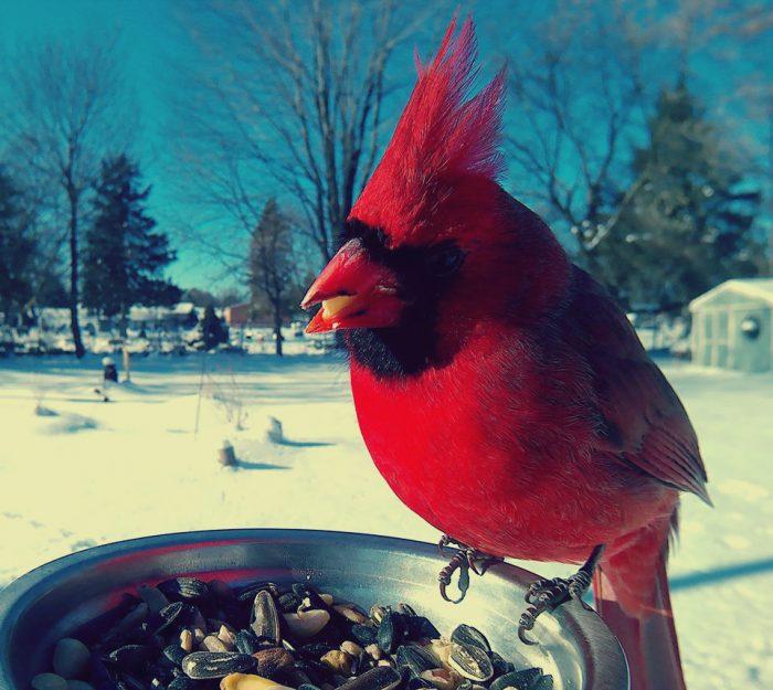 Поставил кормушку за окном и весь год фотографировал птиц, которые прилетали покушать