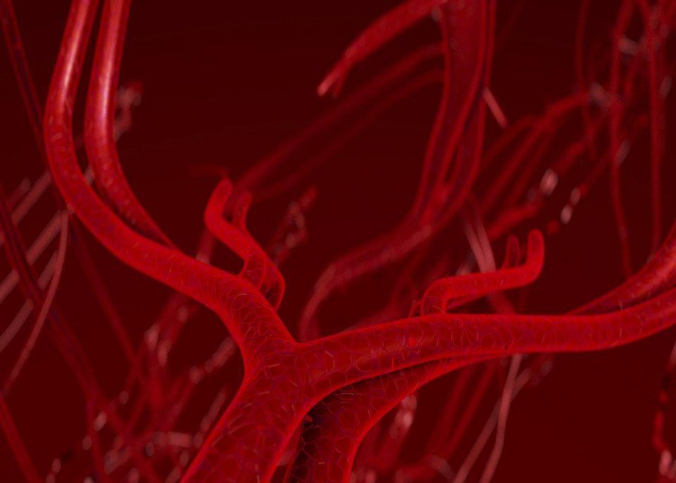 что такое кровь