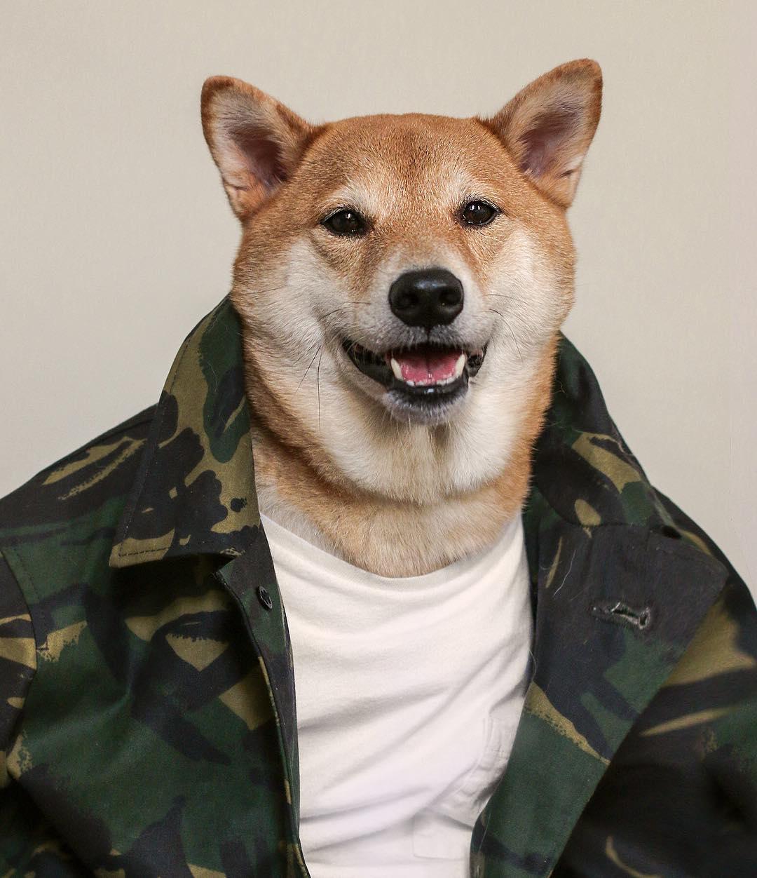 Самый фотогеничный пес Бодхи