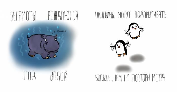 Прикольные факты о животных с визуализацией