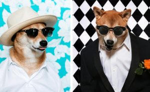 собака Бодхи