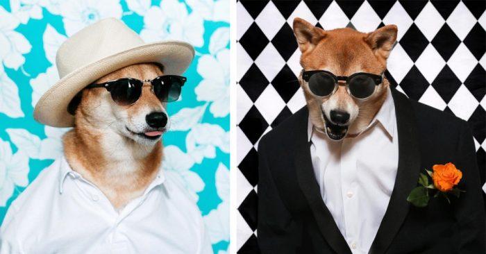 Знакомьтесь, самый фотогеничный пес Бодхи — стиляга одетый в Gucci