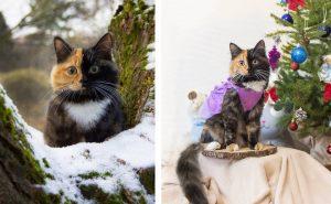 Уникальный окрас кошки Яны из Минска, сделал ее звездой instagram