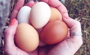разница между коричневыми и белыми куриными яйцами
