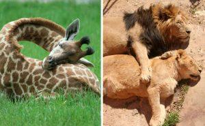 спят животные