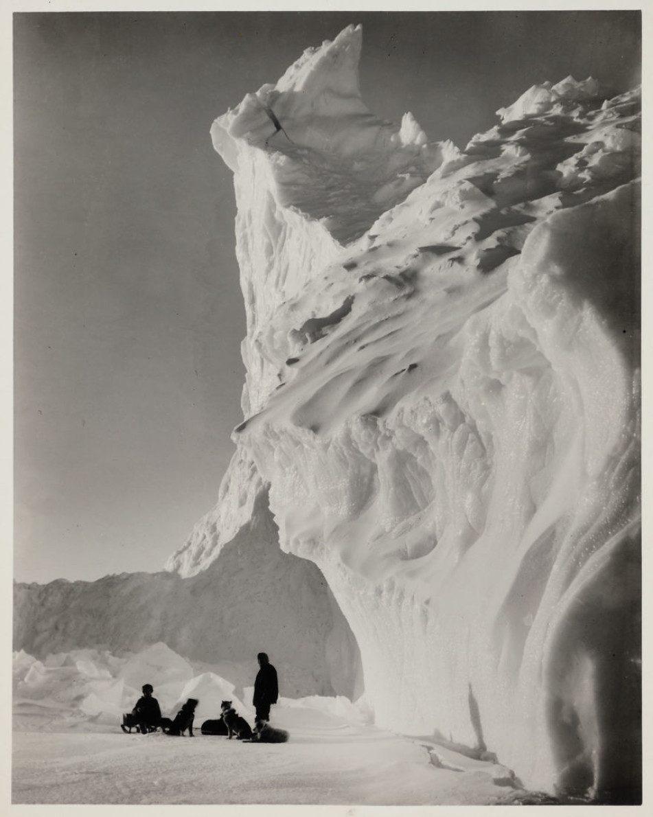 Поисковые собаки на фоне айсберга