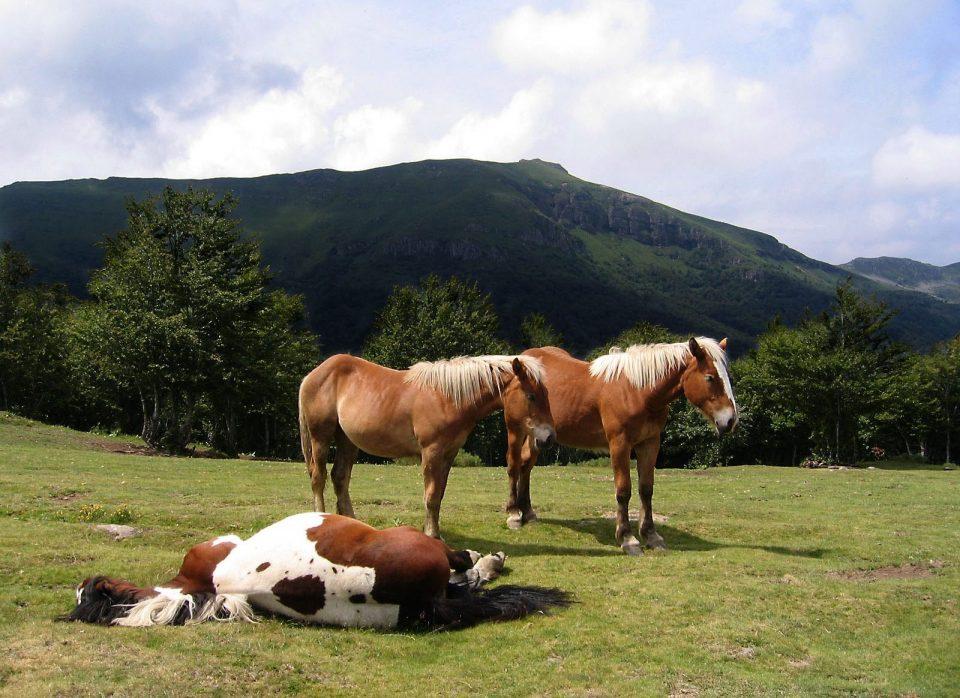 Лошади и коровы