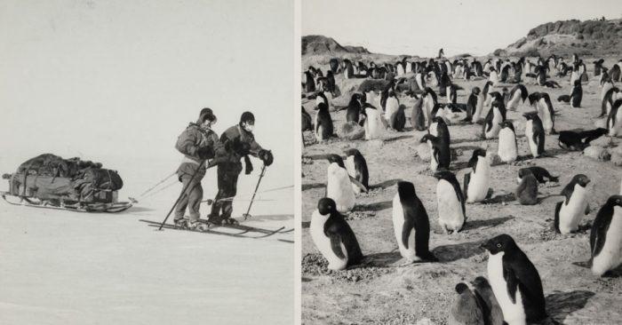 Фото покорения Южного полюса в 1911 году, которое закончилась смертью почти всей команды