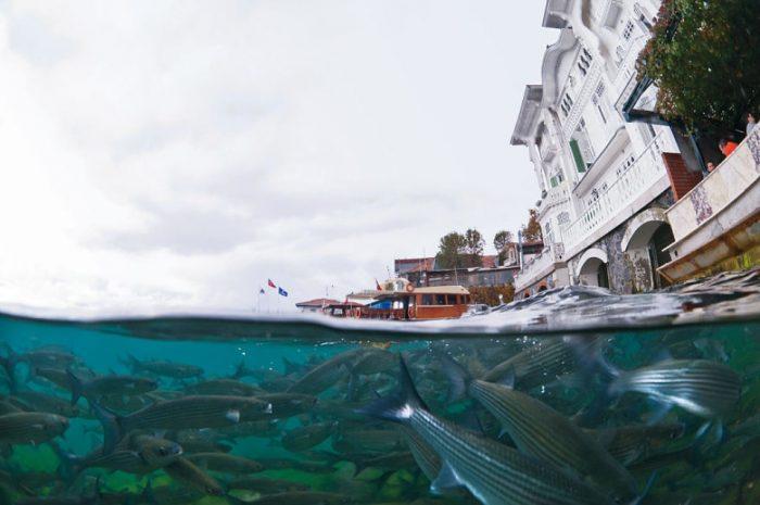 Подводная жизнь города Стамбула или как Стамбул видят рыбы