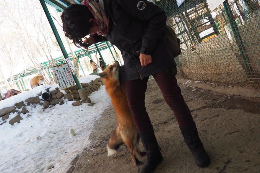 красивые лисы