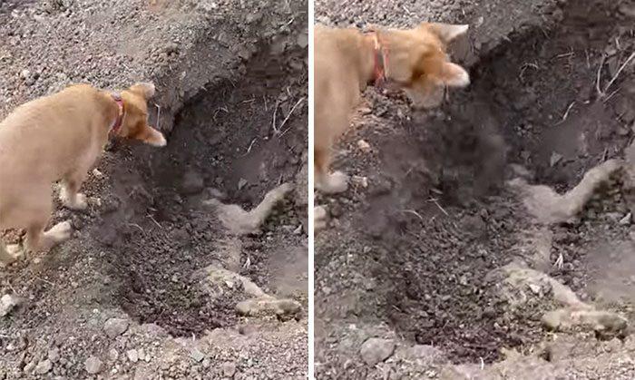 Собака хоронит своего лучшего друга после того, как последний попал в автомобильную аварию
