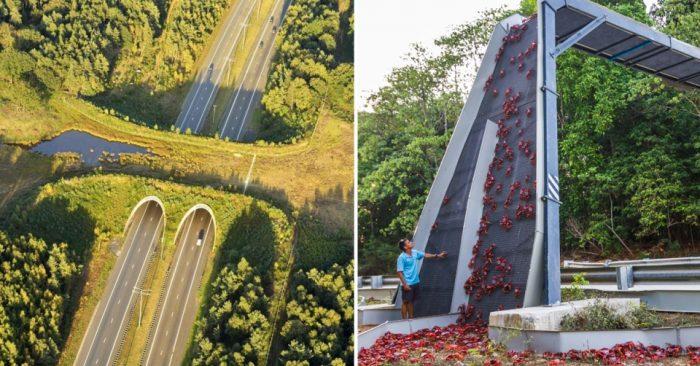 Мосты для животных — экодакты, появляются по всему миру