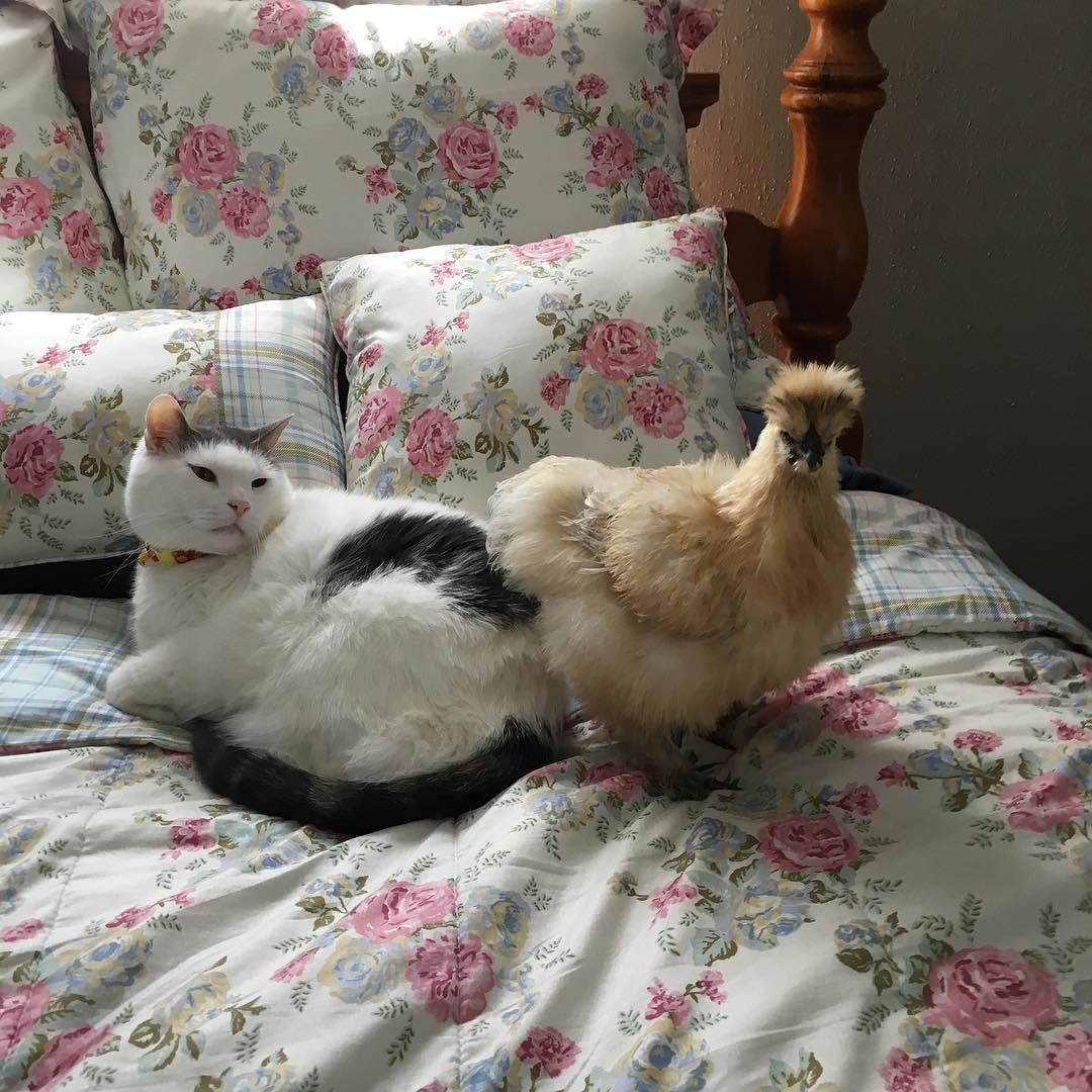 популярный кот